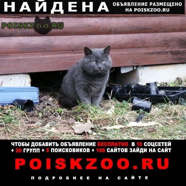 Найден кот шикарнейший г.Руза