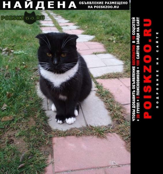 Найден кот г.Истра