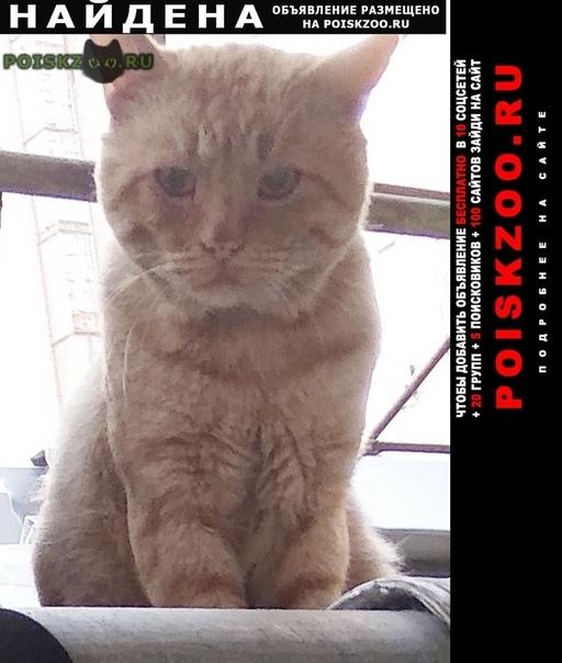 Найден кот рыжий г.Ростов-на-Дону