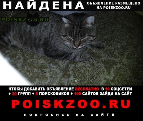 Найден кот. г.Ангарск