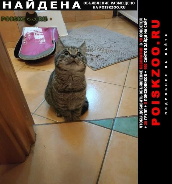 Найден кот г.Санкт-Петербург