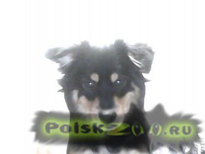 Пропала собака г.Тольятти
