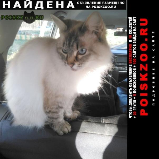 Найдена кошка хозяева отзовитесь г.Кострома