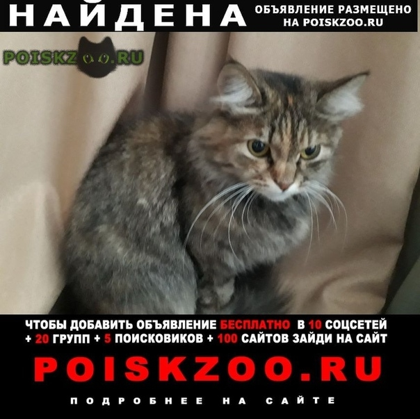 Найдена кошка г.Нижний Новгород