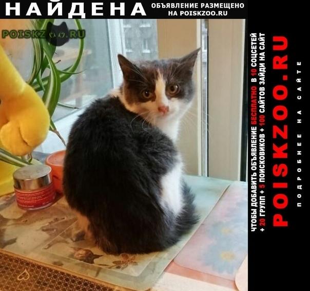 Найдена кошка отдаю в добрые руки двух котят г.Пушкин
