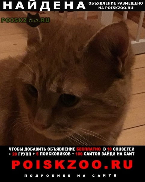 Найден кот рыжий г.Озеры
