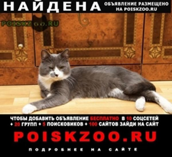 Найден кот серый г.Санкт-Петербург