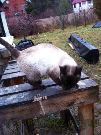 Пропал кот г.Ногинск