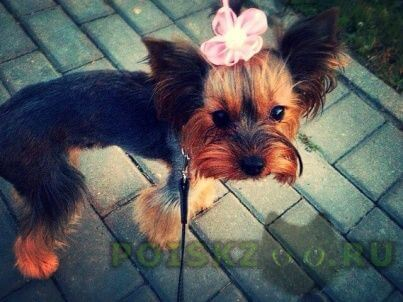 Пропала собака г.Михайлов