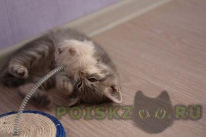 Найден котёнок в г. г.Реутов