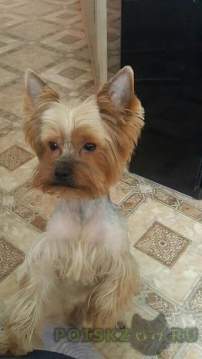Пропала собака кобель sos  г.Санкт-Петербург