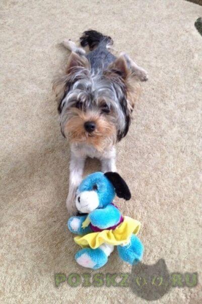 Пропала собака кобель г.Ульяновск