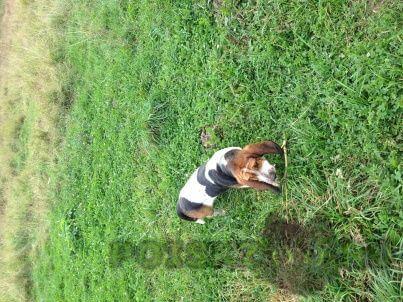 Пропала собака кобель г.Сходня
