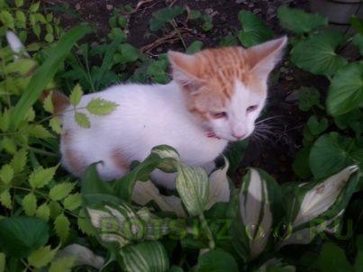 Найдена кошка котенок с рыжей головой и хвостом г.Краснодар