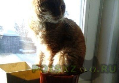 Пропал кот г.Улан-Удэ