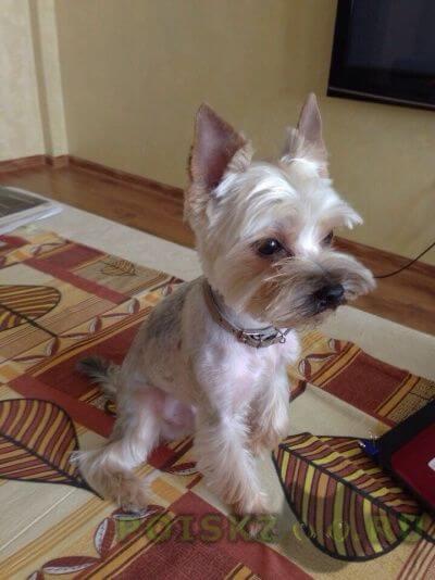 Пропала собака кобель г.Туапсе