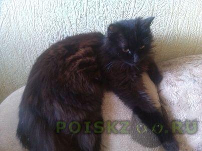 Найдена кошка г.Майкоп (Адыгея)