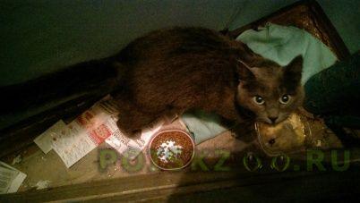 Найден кот серый г.Новосибирск