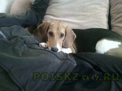 Пропала собака г.Смоленск