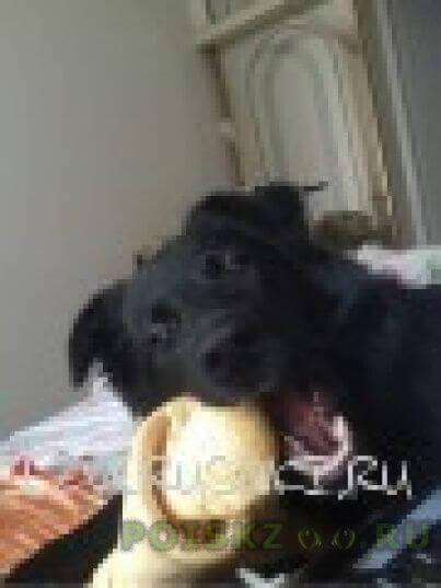 """Пропала собака кобель 29 06 2015 собака, """"красная горка"""" на горе возле дерева тайлер г.Люберцы"""