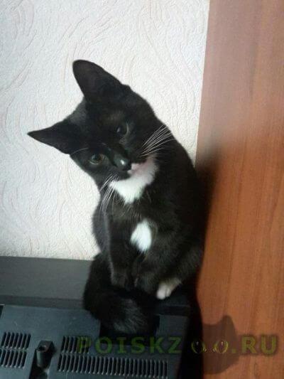 Найдена кошка домашняя г.Москва