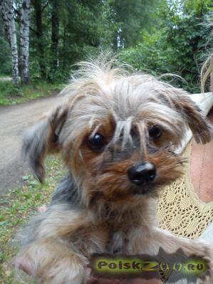 Найдена собака г.Дмитров