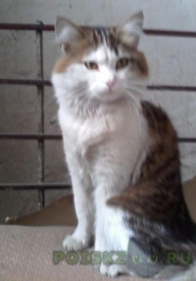 Найден кот г.Видное
