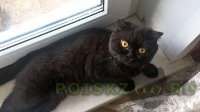 Пропал кот г.Жуковский
