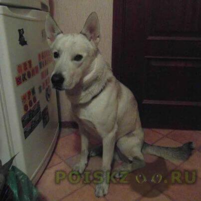 Найдена собака кобель, метис г.Москва