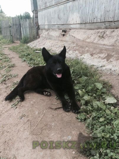 Найдена собака кобель г.Малая Вишера