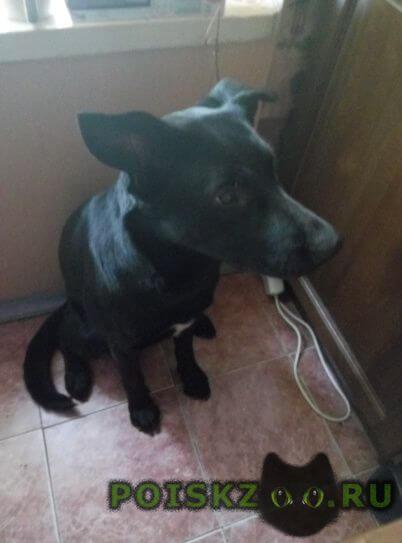 Найдена собака в царицыно г.Москва