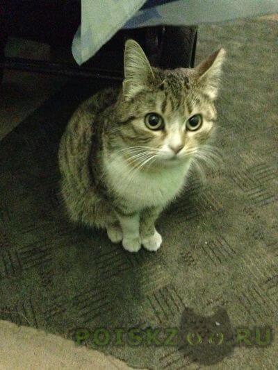 Найдена кошка с желтым ошейником на ул. палиха г.Москва