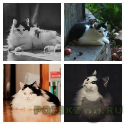 Пропал кот бело-черный пушистый в п. константиновка вознаграждение г.Казань