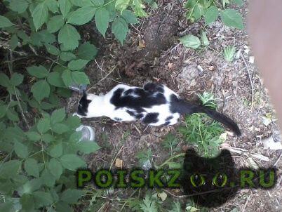Найдена кошка г.Пермь