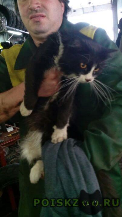 Найден кот срочно  свао.. г.Москва