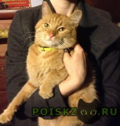 Найден кот рыжий г.Люберцы