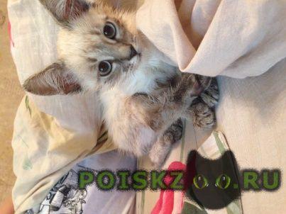 Найден котёнок г.Нижний Новгород