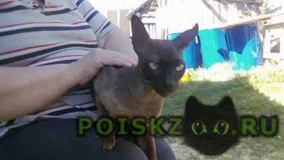 Найден кот г.Пено