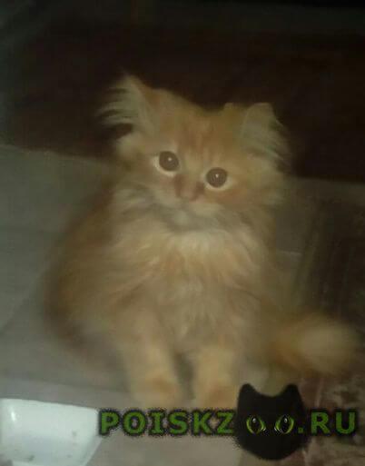 Найден котёнок г.Краснодар