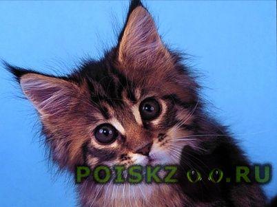 Найдена кошка ищет дом маленькая кошечка г.Москва