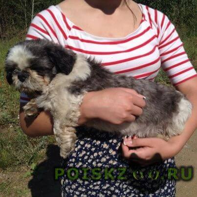 Найдена собака кобель пёсик  г.Екатеринбург