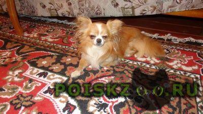 Найдена собака кобель г.Уфа