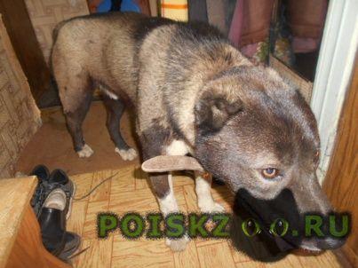 Найдена собака кобель г.Высоковск