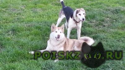Найдена собака г.Серпухов