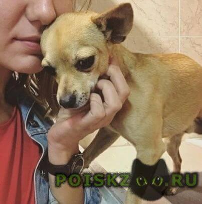 Найдена собака кобель г.Мытищи