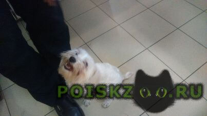 Найдена собака кобель г.Воронеж