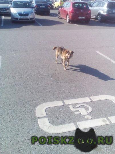 Найдена собака кобель парковка мега парнас г.Санкт-Петербург