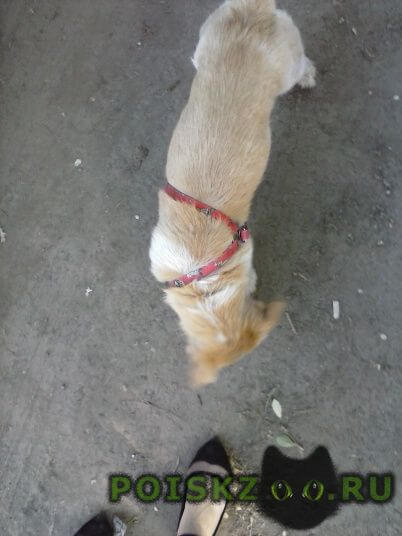 Найдена собака кобель с красным ошейником г.Оренбург