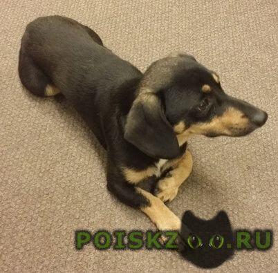 Найдена собака кобель в чистяковской роще г.Краснодар
