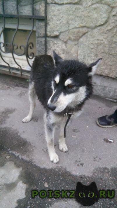 Найдена собака г.Санкт-Петербург